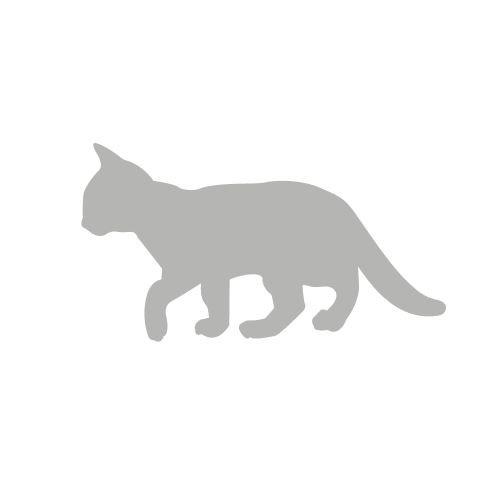 Kot idący