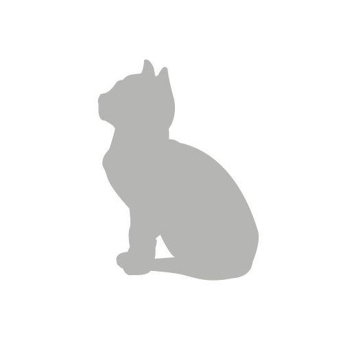 Kot siedzący