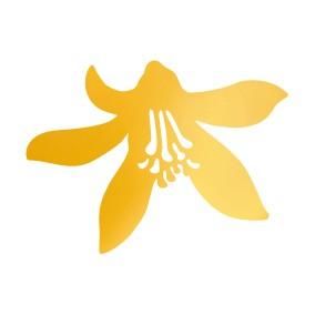 Kwiaty cytryny