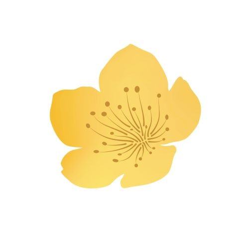 Kwiat jabłoni (pełny)